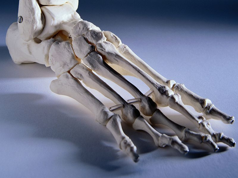 News Picture: Humans May Possess Ability to Regrow Cartilage