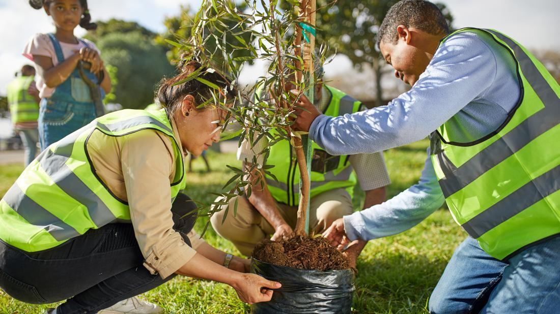 a bunch of people planting trees because they have eco-anxiety
